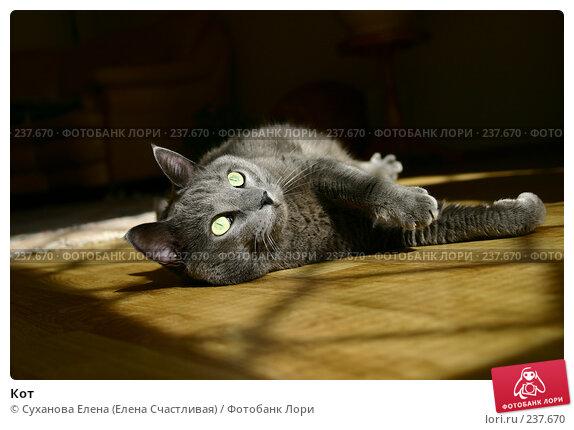 Купить «Кот», фото № 237670, снято 30 марта 2008 г. (c) Суханова Елена (Елена Счастливая) / Фотобанк Лори
