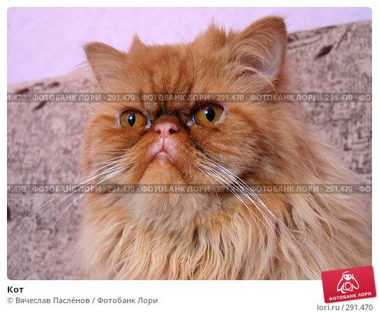 Кот, фото № 291470, снято 16 апреля 2007 г. (c) Вячеслав Паслёнов / Фотобанк Лори