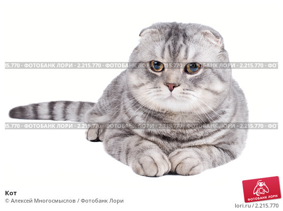 Купить «Кот», фото № 2215770, снято 30 октября 2010 г. (c) Алексей Многосмыслов / Фотобанк Лори