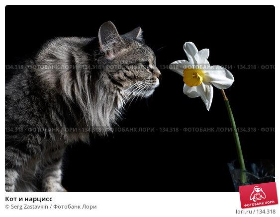 Кот и нарцисс, фото № 134318, снято 28 мая 2006 г. (c) Serg Zastavkin / Фотобанк Лори