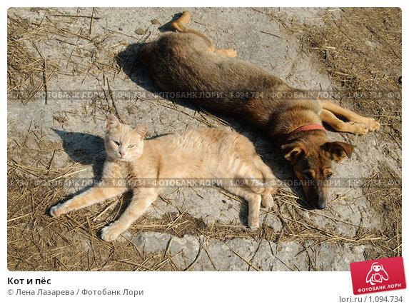Купить «Кот и пёс», фото № 1094734, снято 29 августа 2009 г. (c) Лена Лазарева / Фотобанк Лори