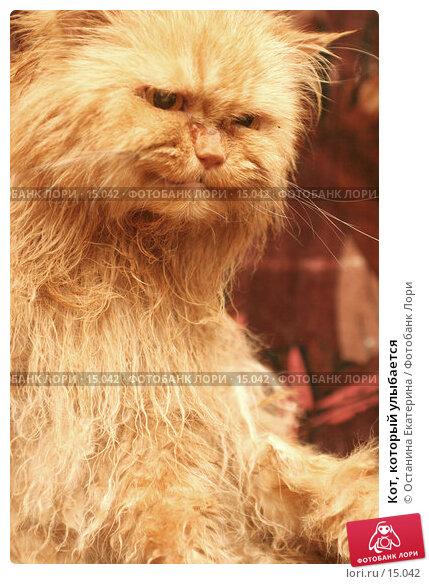 Кот, который улыбается , фото № 15042, снято 1 ноября 2006 г. (c) Останина Екатерина / Фотобанк Лори