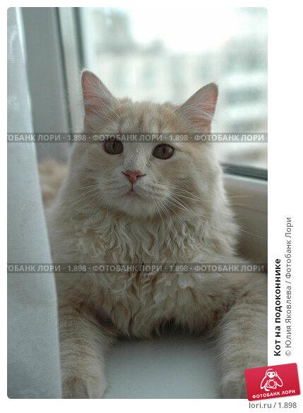 Кот на подоконнике, фото № 1898, снято 22 марта 2006 г. (c) Юлия Яковлева / Фотобанк Лори