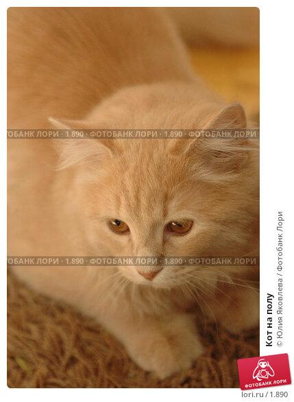 Кот на полу, фото № 1890, снято 22 марта 2006 г. (c) Юлия Яковлева / Фотобанк Лори
