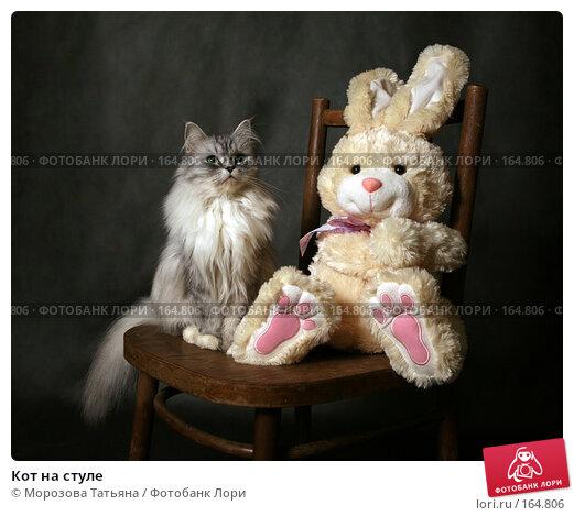Кот на стуле, фото № 164806, снято 20 декабря 2007 г. (c) Морозова Татьяна / Фотобанк Лори