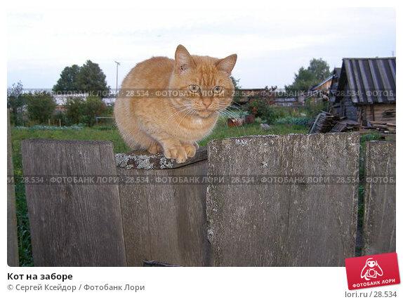 Кот на заборе, фото № 28534, снято 4 сентября 2006 г. (c) Сергей Ксейдор / Фотобанк Лори
