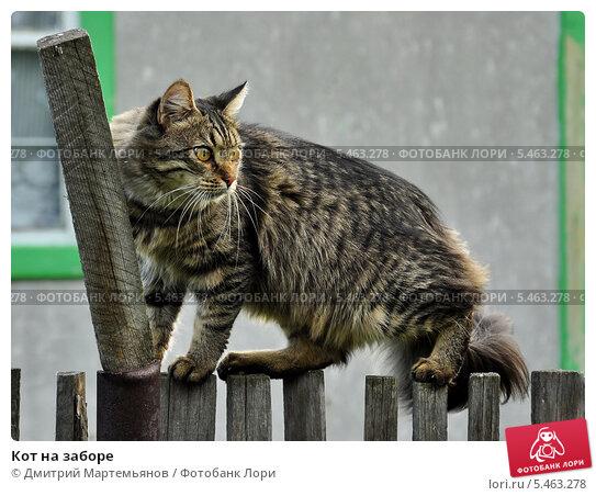Кот на заборе. Стоковое фото, фотограф Дмитрий Мартемьянов / Фотобанк Лори