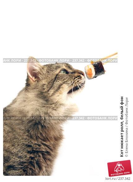 Кот нюхает ролл, белый фон, фото № 237342, снято 28 ноября 2007 г. (c) Елена Блохина / Фотобанк Лори