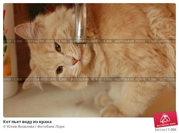 Кот пьет воду из крана, фото № 1906, снято 22 марта 2006 г. (c) Юлия Яковлева / Фотобанк Лори