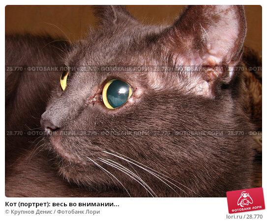Кот (портрет): весь во внимании..., фото № 28770, снято 16 декабря 2006 г. (c) Крупнов Денис / Фотобанк Лори