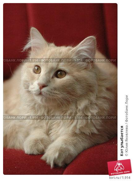 Кот улыбается , фото № 1914, снято 22 марта 2006 г. (c) Юлия Яковлева / Фотобанк Лори