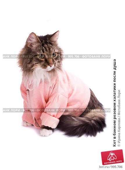 Купить «Кот в банном розовом халатике после душа», фото № 995706, снято 22 июля 2009 г. (c) Ирина Карлова / Фотобанк Лори