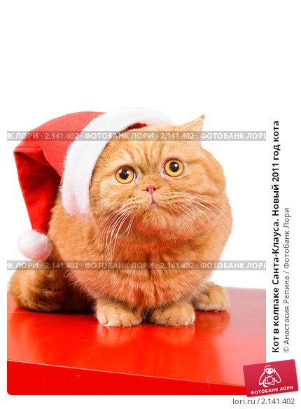 Купить «Кот в колпаке Санта-Клауса. Новый 2011 год кота», фото № 2141402, снято 16 ноября 2010 г. (c) Анастасия Репина / Фотобанк Лори