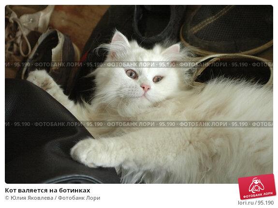 Кот валяется на ботинках, фото № 95190, снято 9 августа 2006 г. (c) Юлия Яковлева / Фотобанк Лори