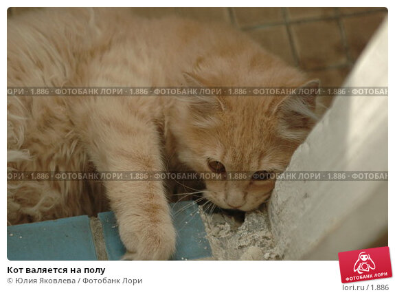 Кот валяется на полу, фото № 1886, снято 22 марта 2006 г. (c) Юлия Яковлева / Фотобанк Лори