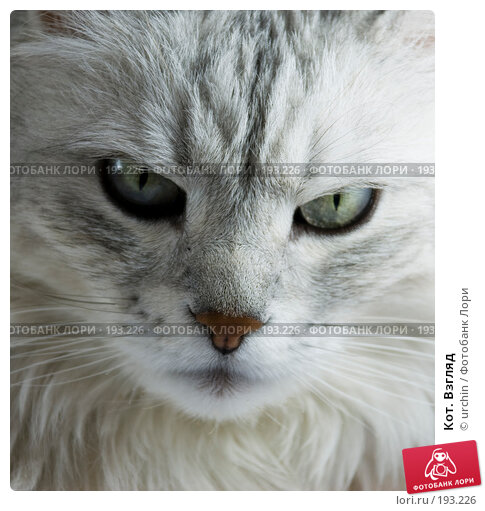 Кот. Взгляд, фото № 193226, снято 2 февраля 2008 г. (c) urchin / Фотобанк Лори