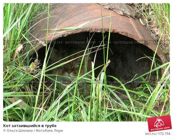 Кот затаившийся в трубе, фото № 172154, снято 26 июля 2007 г. (c) Ольга Шилина / Фотобанк Лори