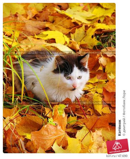 Котёнок, фото № 47690, снято 9 октября 2004 г. (c) дмитрий / Фотобанк Лори