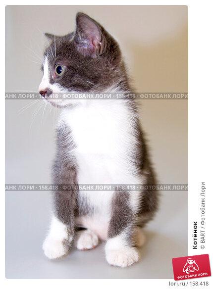 Котёнок, фото № 158418, снято 4 июня 2007 г. (c) BART / Фотобанк Лори