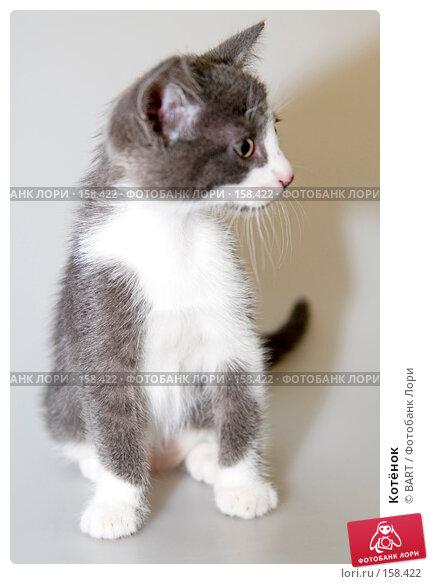Котёнок, фото № 158422, снято 4 июня 2007 г. (c) BART / Фотобанк Лори