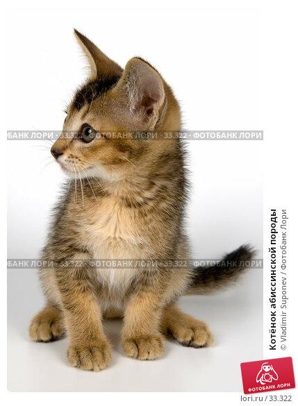 Купить «Котёнок абиссинской породы», фото № 33322, снято 8 апреля 2007 г. (c) Vladimir Suponev / Фотобанк Лори