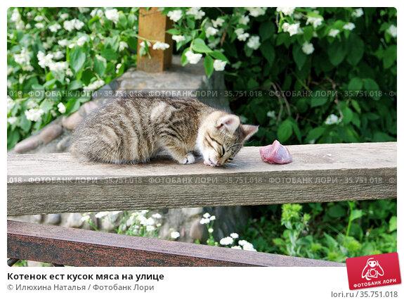 Котенок ест кусок мяса на улице. Стоковое фото, фотограф Илюхина Наталья / Фотобанк Лори