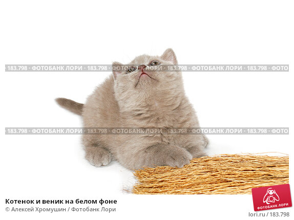 Купить «Котенок и веник на белом фоне», фото № 183798, снято 27 октября 2007 г. (c) Алексей Хромушин / Фотобанк Лори