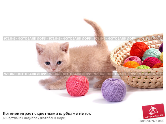 Котенок играет с цветными клубками ниток, фото № 975846, снято 25 июня 2009 г. (c) Cветлана Гладкова / Фотобанк Лори