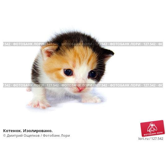Котенок. Изолировано., фото № 127542, снято 17 ноября 2007 г. (c) Дмитрий Ощепков / Фотобанк Лори