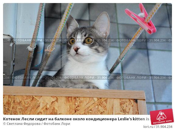 Котенок Лесли сидит на балконе около кондиционера Leslie's kitten is sitting on the balcony near the air conditioner. Стоковое фото, фотограф Светлана Федорова / Фотобанк Лори
