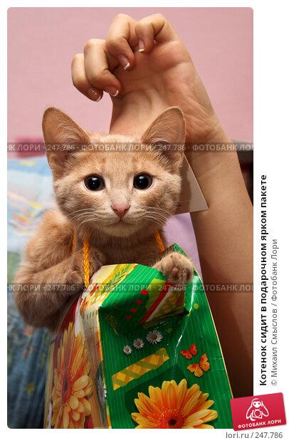 Котенок сидит в подарочном ярком пакете, фото № 247786, снято 6 декабря 2007 г. (c) Михаил Смыслов / Фотобанк Лори