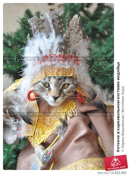 Купить «Котенок в карнавальном костюме индейца», эксклюзивное фото № 12823442, снято 5 октября 2015 г. (c) Лариса Вишневская / Фотобанк Лори