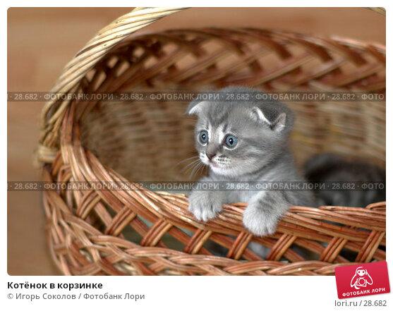Котёнок в корзинке, фото № 28682, снято 13 мая 2006 г. (c) Игорь Соколов / Фотобанк Лори