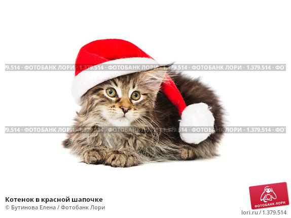 Котенок в красной шапочке. Стоковое фото, фотограф Бутинова Елена / Фотобанк Лори