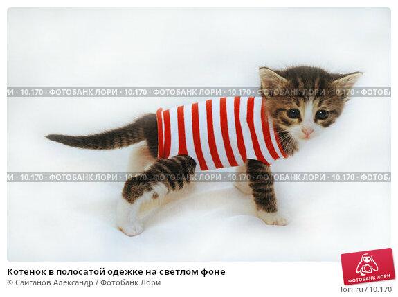 Котенок в полосатой одежке на светлом фоне, фото № 10170, снято 17 января 2005 г. (c) Сайганов Александр / Фотобанк Лори