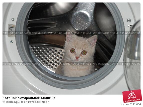 Котенок в стиральной машине, фото № 111634, снято 15 октября 2007 г. (c) Елена Бринюк / Фотобанк Лори