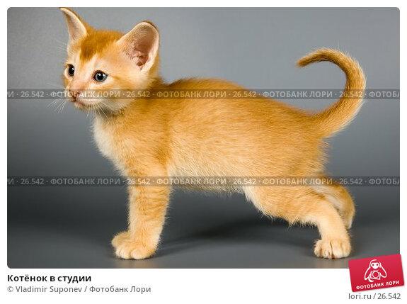 Купить «Котёнок в студии», фото № 26542, снято 17 марта 2007 г. (c) Vladimir Suponev / Фотобанк Лори