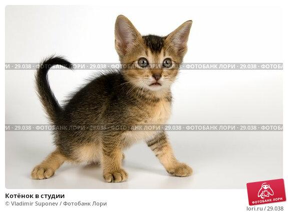 Котёнок в студии, фото № 29038, снято 31 марта 2007 г. (c) Vladimir Suponev / Фотобанк Лори