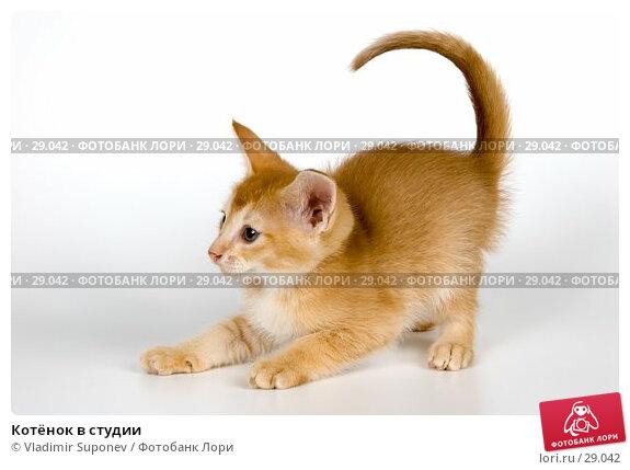 Котёнок в студии, фото № 29042, снято 31 марта 2007 г. (c) Vladimir Suponev / Фотобанк Лори