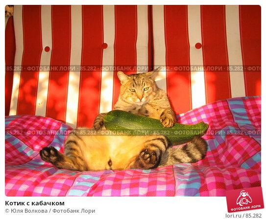 Котик с кабачком, фото № 85282, снято 16 сентября 2006 г. (c) Юля Волкова / Фотобанк Лори