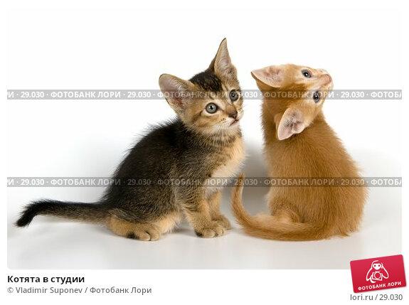 Котята в студии, фото № 29030, снято 31 марта 2007 г. (c) Vladimir Suponev / Фотобанк Лори