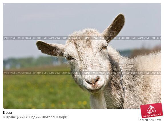 Купить «Коза», фото № 249794, снято 8 мая 2006 г. (c) Кравецкий Геннадий / Фотобанк Лори