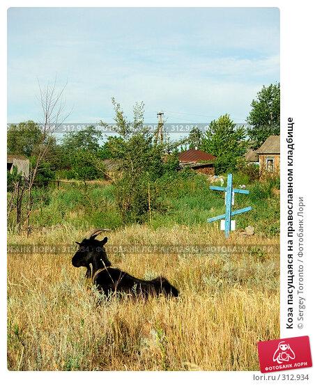 Купить «Коза пасущаяся на православном кладбище», фото № 312934, снято 6 января 2004 г. (c) Sergey Toronto / Фотобанк Лори