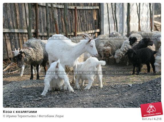 Коза с козлятами, эксклюзивное фото № 4218, снято 1 мая 2006 г. (c) Ирина Терентьева / Фотобанк Лори