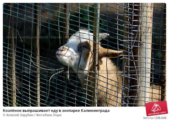 Козлёнок выпрашивает еду в зоопарке Калининграда, фото № 298646, снято 22 сентября 2007 г. (c) Алексей Зарубин / Фотобанк Лори