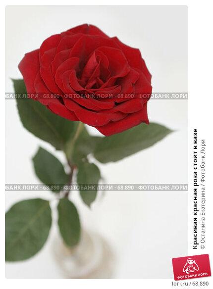 Красивая красная роза стоит в вазе, фото № 68890, снято 31 января 2007 г. (c) Останина Екатерина / Фотобанк Лори
