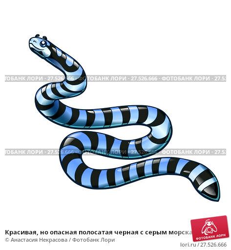 Купить «Красивая, но опасная полосатая черная с серым морская змея изолированно на белом фоне. Иллюстрация в мультипликационном стиле», иллюстрация № 27526666 (c) Анастасия Некрасова / Фотобанк Лори