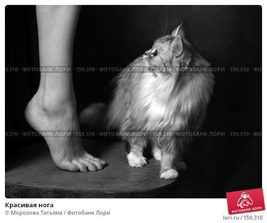 Красивая нога, фото № 159310, снято 20 декабря 2007 г. (c) Морозова Татьяна / Фотобанк Лори