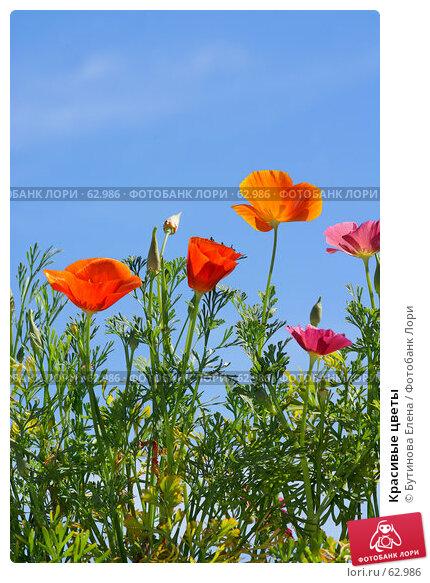 Красивые цветы, фото № 62986, снято 17 июля 2007 г. (c) Бутинова Елена / Фотобанк Лори