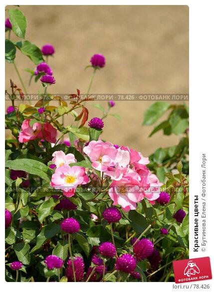 Красивые цветы, фото № 78426, снято 28 августа 2007 г. (c) Бутинова Елена / Фотобанк Лори